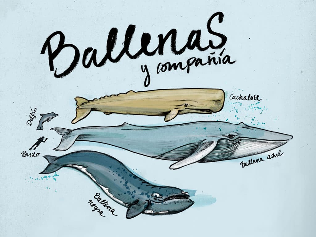 Ilustracion Ballenas Javier Medina